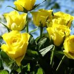 Kako da vam cvijeće duže traje: 6 profesionalnih trikova