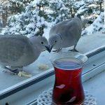 Predivna zivotna prica o dva goluba